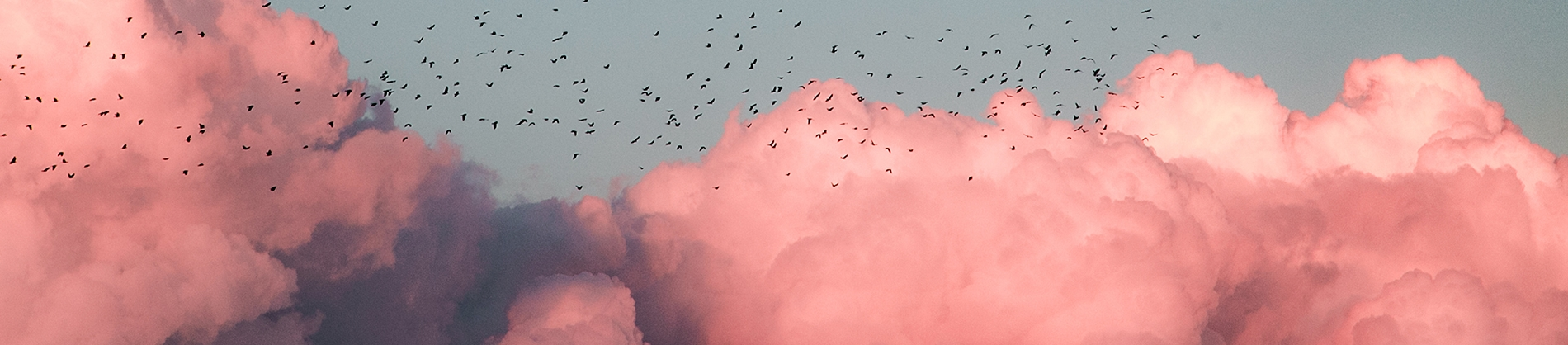 Pink clouds with birds flying across the sky
