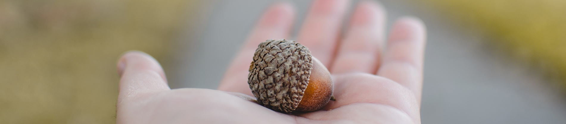 A person holding an acorn
