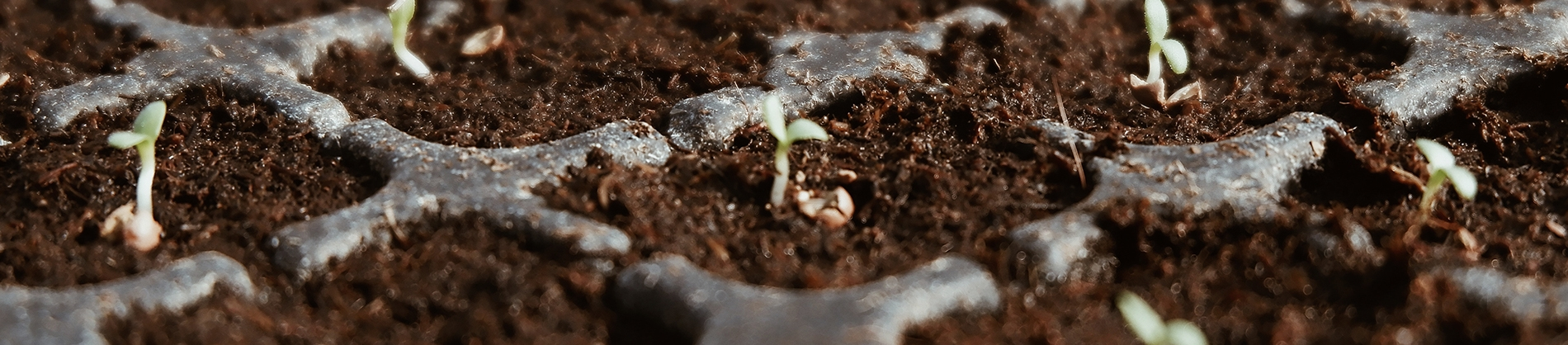 Small seeds planted in soil