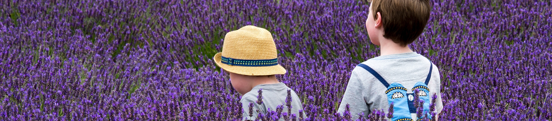 Two small children walking through a lavender field