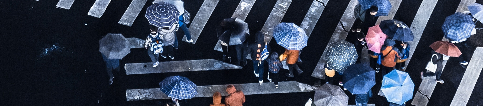 A crowd with umbrellas crossing a large zebra crossing
