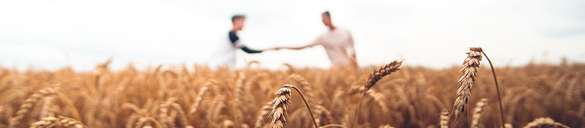 Two men shaking hands in the distance of a wheat field