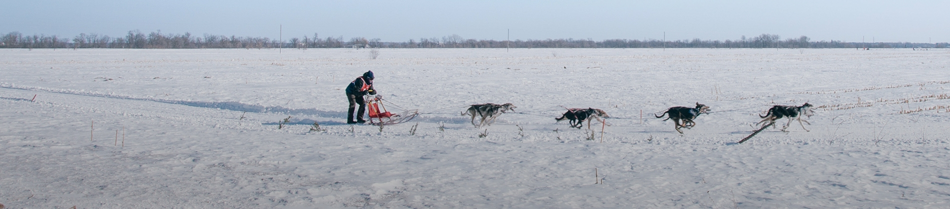 A man riding a sleigh pulled by dogs
