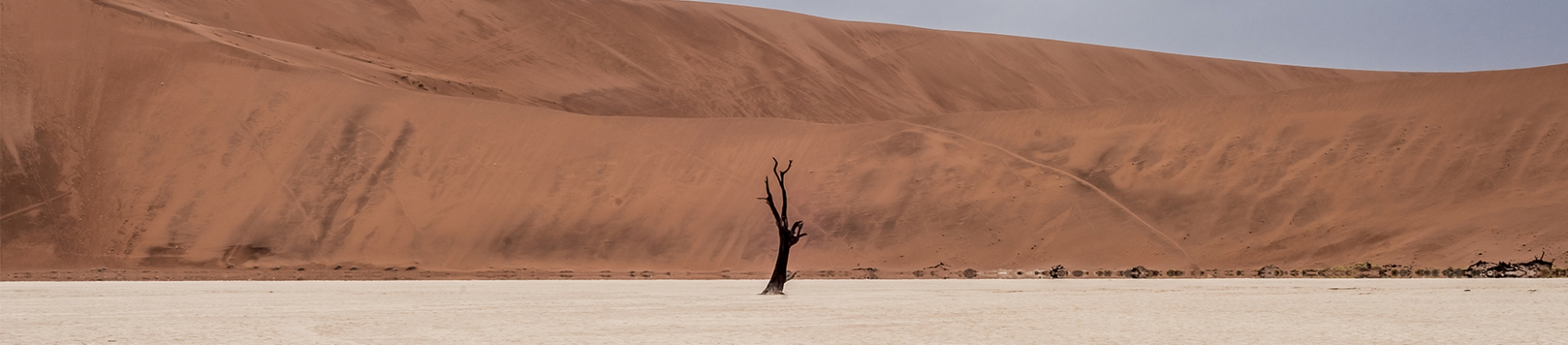 A baron tree in a desert