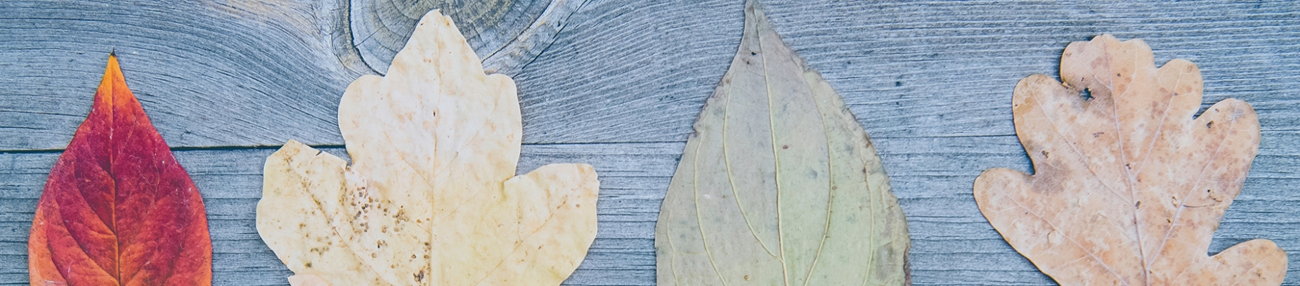 Different coloured leaves on a wooden table