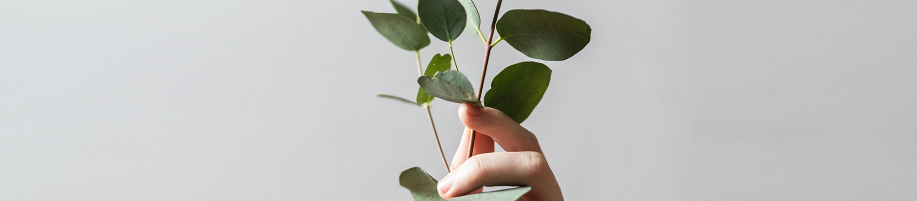 A hand holding up a plant against a grey background